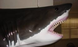 $2,849 New Great White Shark Beautiful Museum Quality Mount