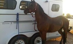 $50 Horse Trailer Rental Local and Long Distance Phoenix AZ