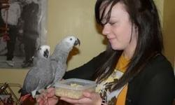 African Greys for Adoption