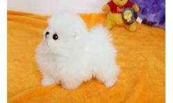 Beautiful Pomeranian puppies Available For Sale