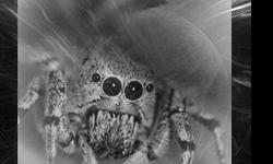"Free ""Salticid"" Scifi Short Story on Wattpad in 30 parts, 30"