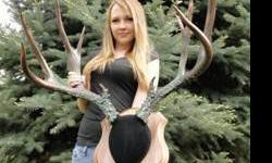 "Huge Antlers - Professional Taxidermy Colorado ""Timberline"