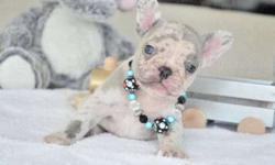Lovable Girls and Boys French Bulldog Puppies