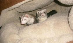The Ferret PlayPen Ferret Grooming Always A Great Choice