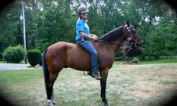 Trail QUARTER/MORGAN HORSE Gelding for half LEASE - Must See